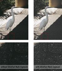 ME_ibis_small_en